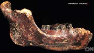 أحفورة لعظم فك بشري تحدث ضجة في عالم الآثار
