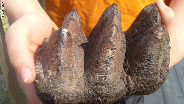 صبي يعثر على اكتشاف أحفوري لمخلوق ضخم