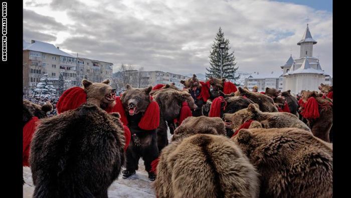 في رومانيا.. الدببة ترقص أيضاً احتفالاً برأس السنة المقبل