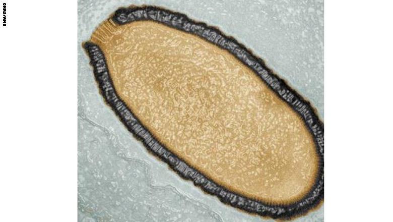 فيروس عملاق يفيق من سباته بعد 30 الف سنة ومخاوف من عودة أخرى فتاكة
