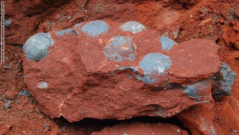 صورة للبيض المكتشف