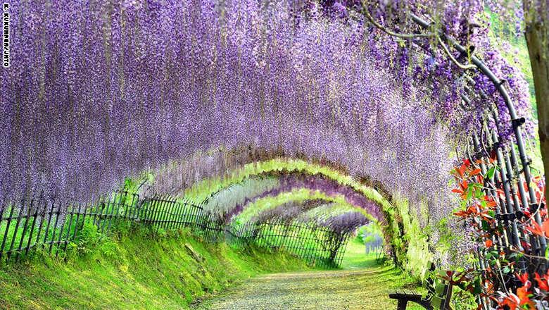 السياحة باليابان 1_286