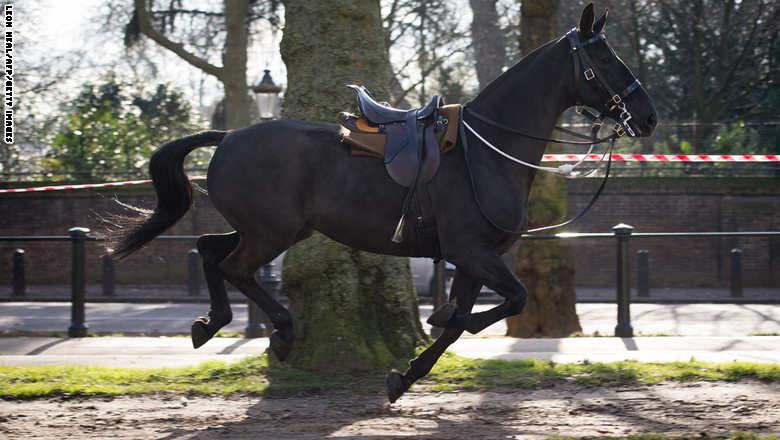 حصان يلوذ بالفرار شوارع لندن..