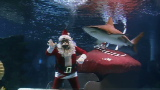 Scuba Santa swims with the sharks