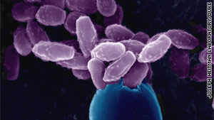 This strain of C. gattii fungus seems to have mutated relatively  recently, researchers say.