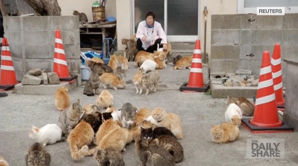 جزيرة القطط في اليابان.. حيث تطغى الهررة على البشر