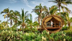 بيوت في الأشجار تطرح حلولاً للعيش المستدام