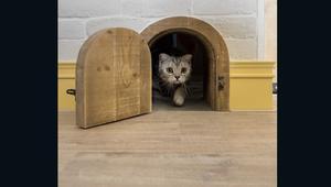 موضة جديدة بعالم الهندسة.. منازل صديقة للقطط