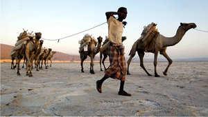 قافلة جمال تقوم بنقل حمولة من الملح، في منطقة بحيرة عسل، جيبوتي، 19 ديسمبر 2002