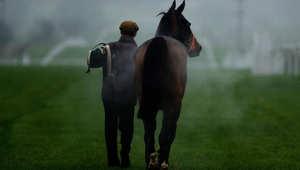 هل الفروسية رياضة لفاحشي الثراء فعلاً؟ كم تبلغة كلفة امتلاك حصان؟