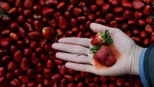 دراسة: المبيدات الحشرية تؤذي الخصوبة لدى النساء