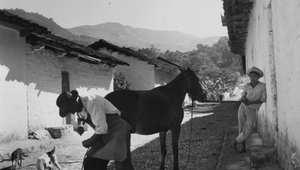 وجدت هذه المهنة كوظيفة ونوع من أنواع الفن منذ آلاف السنين، وتتضمن مهارات عدة كالحدادة والفروسية. وهذه صورة أرشيفية يظهر بيطار وهو يعمل في قرية جبلية في غواتيمالا  عام 1950
