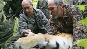 صورة للرئيس الروسي ساعة إطلاق النمر في البرية