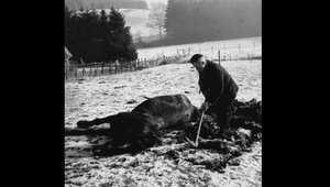 مزارع يدفن حصانه الذي قتل أثناء المعارك العنيفة