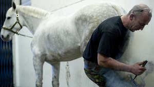 بيطار الخيول يمضي سنين عدة وهو يتعلم كيفية تشكيل  حوافر وحدوات الخيل. وهذا بيطار خيول من هاوسهولد كافالري وهو يستعد لحفل الزفاف الملكي عام 2011 بين نجلي ولي العهد البريطاني الأمير ويليام وكيت ميدلتون.