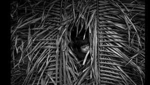 بالصور..هكذا تعيش قبائل الأمازون بعزلتها في أدغال البرازيل