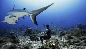 بالصور..اكتشف أسرار المحيط من خلال الغوص الحر