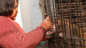 زوجان هنديان يسميان قردهما وريثاً وحيداً لثروتهما