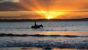 حصان يمشي في خليج باستراليا