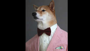 هل هذا هو الكلب الأكثر أناقة في العالم؟