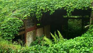 """قرية صينية """"سحرية""""..وهبت نفسها للطبيعة الأم بأمها وأبيها"""