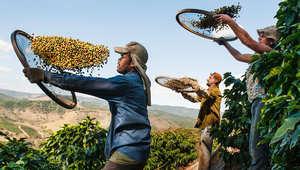 بين قطف بذور القهوة والتأمل وصيد الأسماك..جولة على أجمل عادات وتقاليد الشعوب من حول العالم