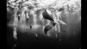 """الجائزة الكبرى: """"همس الحيتان"""" لأنور باتجين فلوريوك"""
