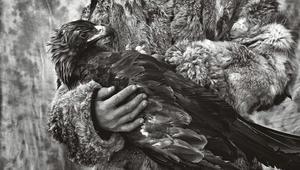 اكتشف من الصياد والفريسة بهذه الصور..الثعلب أم النسر؟