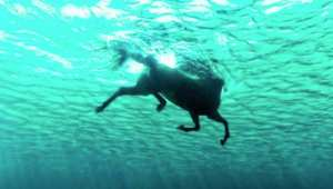في حادثة غريبة..  إنقاذ حصان  سبح مسافة 11 كيلومتراً في البحر بأستراليا