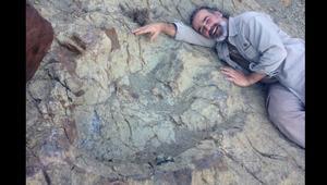 اكتشاف طبعة ديناصور عملاقة في أمريكا الجنوبية كسرت أرقاماً قياسية