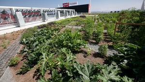 لماذا يملك هذا الملعب مزرعة كاملة على سقفه؟