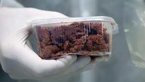 هل أكل البشر للحوم مصنّعة بالمختبر مصير محتوم؟