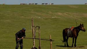 """بالصور..للخيول مكانة كبيرة في أرض """"جنكيز خان"""""""