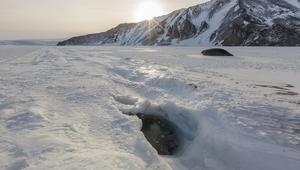 كيف يعيش سكان القطب الجنوبي المتجمد؟