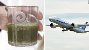 كيف تمكنت هذه الشركة من تحويل الطحالب لوقود للطائرات؟