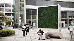 أشجار من طحالب تأخذ شكل مربعات..تنتشر في هذه المدن