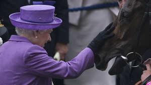 حصان الملكة إليزابيث الثانية.. تظهر بعيناته آثار المورفين