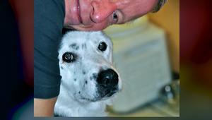 شاهد.. كلب يساعد رجلاً في التخلص من السمنة وفقدان 70 كيلوغراماً