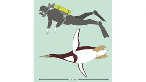 البطريق المنقرض لم يكن ظريفاً على الإطلاق!