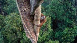 سحر البرية يتجلى في أجمل صور الطبيعة لعام 2016