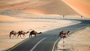 هل حل خفض انبعاثات الطيران يكمن في قلب الصحراء العربية؟