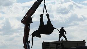 مالاوي تعيد توطين 500 فيل أفريقي لحمايتها من الانقراض