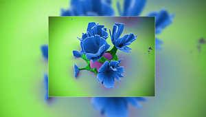 إنها ليست زهوراً.. بل تحف ميكروسكوبية بتفاعلات كيماوية