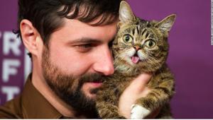 مشاهير القطط