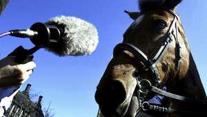 استمع إلى صوت دقات قلب الحصان وأنفاسه المتسارعة في المباريات