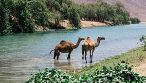 هل تصدق بأن هذه الجنة الاستوائية في عُمان؟ شاهد الصور بنفسك!