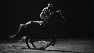 """ظلال هذه الخيول """"تنير"""" عالم الفروسية الساحر"""