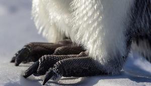 من أنتاركتيكا إلى أفريقيا..ماذا تقول لطيور البطريق في يومها العالمي؟