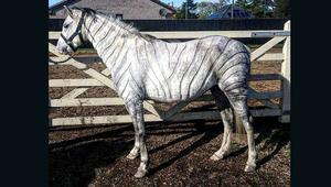 قصة بوكيمون لحصانك؟ شاهد أغرب قصات الشعر للأحصنة