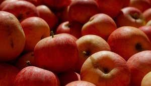 هل يمكن الاستغناء عن إنتاج الاطعمة المعدلة وراثياً واتباع تقنيات أخرى؟